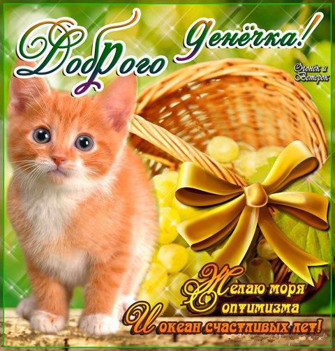 Утро, видео открытки с животными с добрым утром