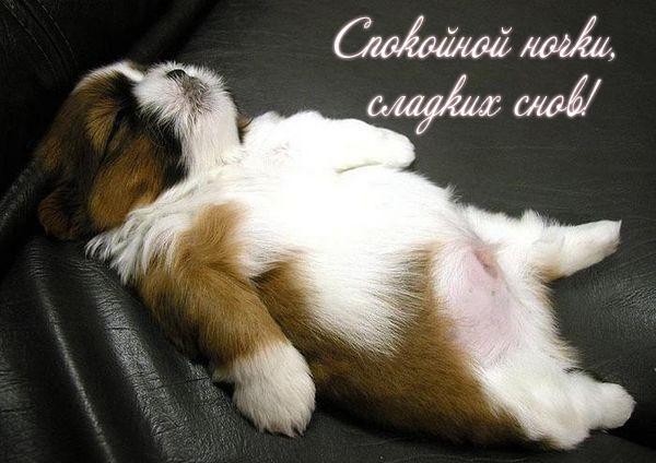 красивая веселая открытка доброй ночи