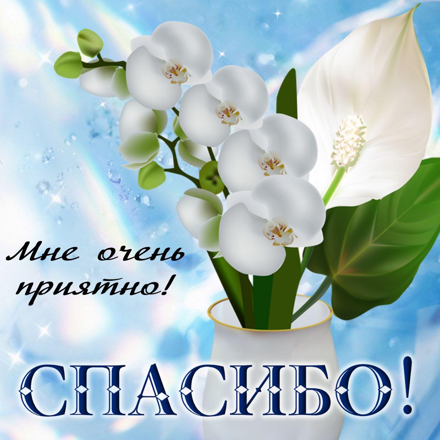 http://lovezka.ru/senks/17.jpg
